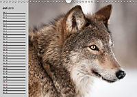 Wölfe. Verwegene Anmut (Wandkalender 2019 DIN A3 quer) - Produktdetailbild 7