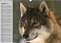 Wölfe. Verwegene Anmut (Wandkalender 2019 DIN A3 quer) - Produktdetailbild 8