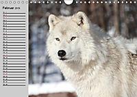 Wölfe. Verwegene Anmut (Wandkalender 2019 DIN A4 quer) - Produktdetailbild 2