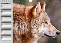 Wölfe. Verwegene Anmut (Wandkalender 2019 DIN A4 quer) - Produktdetailbild 11