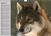 Wölfe. Verwegene Anmut (Wandkalender 2019 DIN A4 quer) - Produktdetailbild 8