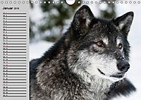 Wölfe. Verwegene Anmut (Wandkalender 2019 DIN A4 quer) - Produktdetailbild 1