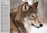Wölfe. Verwegene Anmut (Wandkalender 2019 DIN A4 quer) - Produktdetailbild 7