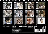 Wölfe. Verwegene Anmut (Wandkalender 2019 DIN A4 quer) - Produktdetailbild 13
