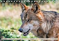 Wolf - Imposanter Jäger (Tischkalender 2019 DIN A5 quer) - Produktdetailbild 1