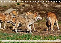 Wolf - Imposanter Jäger (Tischkalender 2019 DIN A5 quer) - Produktdetailbild 3