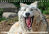 Wolf - Imposanter Jäger (Tischkalender 2019 DIN A5 quer) - Produktdetailbild 4