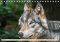Wolf - Imposanter Jäger (Tischkalender 2019 DIN A5 quer) - Produktdetailbild 6