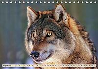 Wolf - Imposanter Jäger (Tischkalender 2019 DIN A5 quer) - Produktdetailbild 8