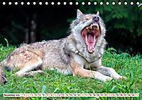 Wolf - Imposanter Jäger (Tischkalender 2019 DIN A5 quer) - Produktdetailbild 11