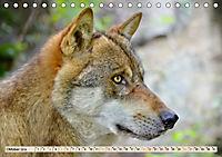 Wolf - Imposanter Jäger (Tischkalender 2019 DIN A5 quer) - Produktdetailbild 10