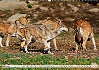 Wolf - Imposanter Jäger (Wandkalender 2019 DIN A2 quer) - Produktdetailbild 3