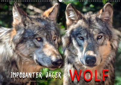 Wolf - Imposanter Jäger (Wandkalender 2019 DIN A2 quer), Peter Roder