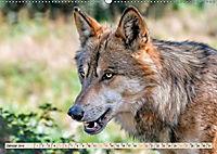 Wolf - Imposanter Jäger (Wandkalender 2019 DIN A2 quer) - Produktdetailbild 1