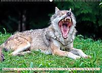 Wolf - Imposanter Jäger (Wandkalender 2019 DIN A2 quer) - Produktdetailbild 11