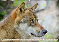 Wolf - Imposanter Jäger (Wandkalender 2019 DIN A2 quer) - Produktdetailbild 10