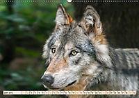 Wolf - Imposanter Jäger (Wandkalender 2019 DIN A2 quer) - Produktdetailbild 6