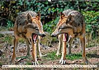 Wolf - Imposanter Jäger (Wandkalender 2019 DIN A2 quer) - Produktdetailbild 7