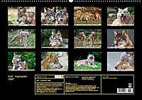 Wolf - Imposanter Jäger (Wandkalender 2019 DIN A2 quer) - Produktdetailbild 13