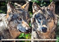 Wolf - Imposanter Jäger (Wandkalender 2019 DIN A3 quer) - Produktdetailbild 2