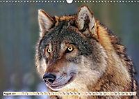 Wolf - Imposanter Jäger (Wandkalender 2019 DIN A3 quer) - Produktdetailbild 8
