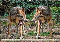 Wolf - Imposanter Jäger (Wandkalender 2019 DIN A3 quer) - Produktdetailbild 7