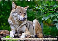 Wolf - Imposanter Jäger (Wandkalender 2019 DIN A3 quer) - Produktdetailbild 9