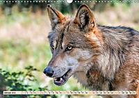 Wolf - Imposanter Jäger (Wandkalender 2019 DIN A3 quer) - Produktdetailbild 1