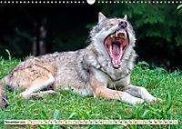 Wolf - Imposanter Jäger (Wandkalender 2019 DIN A3 quer) - Produktdetailbild 11