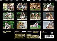 Wolf - Imposanter Jäger (Wandkalender 2019 DIN A3 quer) - Produktdetailbild 13