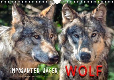 Wolf - Imposanter Jäger (Wandkalender 2019 DIN A4 quer), Peter Roder