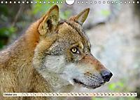 Wolf - Imposanter Jäger (Wandkalender 2019 DIN A4 quer) - Produktdetailbild 10