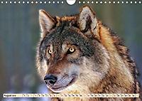 Wolf - Imposanter Jäger (Wandkalender 2019 DIN A4 quer) - Produktdetailbild 8