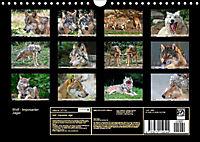 Wolf - Imposanter Jäger (Wandkalender 2019 DIN A4 quer) - Produktdetailbild 13