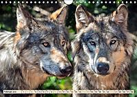 Wolf - Imposanter Jäger (Wandkalender 2019 DIN A4 quer) - Produktdetailbild 2