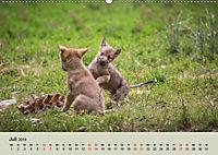 Wolfsrudel (Wandkalender 2019 DIN A2 quer) - Produktdetailbild 7