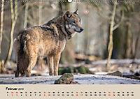 Wolfsrudel (Wandkalender 2019 DIN A2 quer) - Produktdetailbild 2