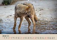 Wolfsrudel (Wandkalender 2019 DIN A2 quer) - Produktdetailbild 1