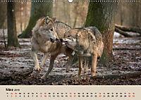 Wolfsrudel (Wandkalender 2019 DIN A2 quer) - Produktdetailbild 3