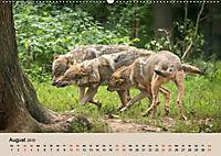 Wolfsrudel (Wandkalender 2019 DIN A2 quer) - Produktdetailbild 8