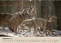 Wolfsrudel (Wandkalender 2019 DIN A2 quer) - Produktdetailbild 12
