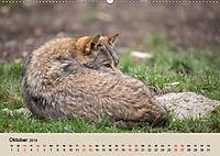 Wolfsrudel (Wandkalender 2019 DIN A2 quer) - Produktdetailbild 10