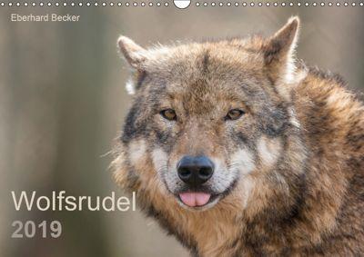 Wolfsrudel (Wandkalender 2019 DIN A3 quer), Eberhard Becker