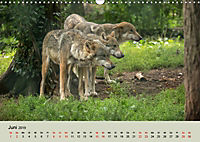 Wolfsrudel (Wandkalender 2019 DIN A3 quer) - Produktdetailbild 6
