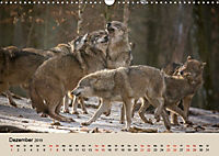 Wolfsrudel (Wandkalender 2019 DIN A3 quer) - Produktdetailbild 12