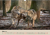 Wolfsrudel (Wandkalender 2019 DIN A3 quer) - Produktdetailbild 3