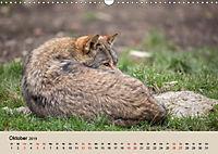 Wolfsrudel (Wandkalender 2019 DIN A3 quer) - Produktdetailbild 10