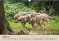 Wolfsrudel (Wandkalender 2019 DIN A3 quer) - Produktdetailbild 8