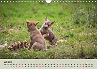 Wolfsrudel (Wandkalender 2019 DIN A4 quer) - Produktdetailbild 7
