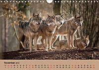 Wolfsrudel (Wandkalender 2019 DIN A4 quer) - Produktdetailbild 11